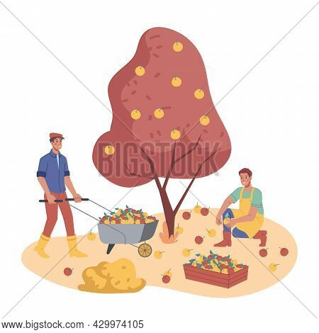 Autumn Garden, People Working On Plantation Picking Or Plucking Apples From Trees Isolated. Vector M