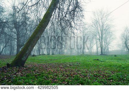Autumn landscape, autumn tree in the foggy autumn weather. Foggy autumn park, November morning, autumn landscape, autumn foggy forest, autumn landscape, autumn trees, autumn park
