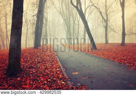 Fall foggy park alley, foggy autumn landscape, autumn deserted park alley in foggy day. Fall park alley, fall picturesque landscape, fall trees in the fog autumn day