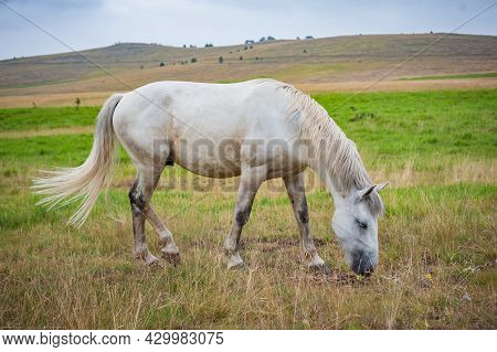 Portrait Of Beautiful Horse Enjoy In Freedom On Mountains Meadow