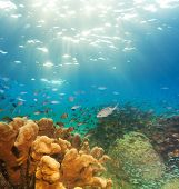 exciting underwater panorama with corals fish schools and sunlight poster