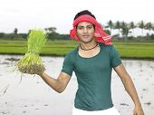 an indian farmer working in his paddy field poster