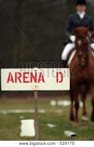 Horse In Arena