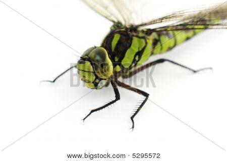Dragonfly Head Closeup