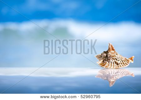 seashell  and reflection with ocean, wave and seascape, shallow dof
