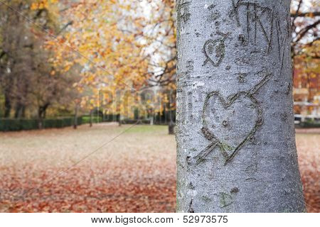 Heart-shape On Trunk