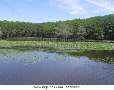 Caddo Lake 3