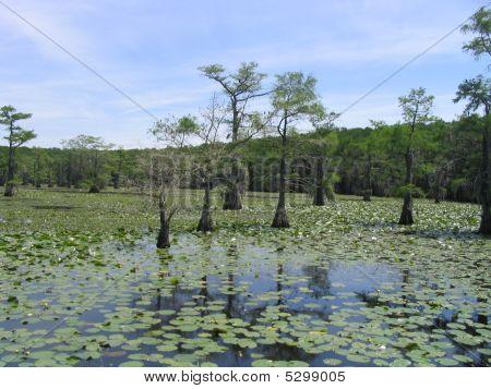 Caddo Lake 7