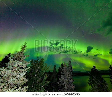 Intense Green Aurora Borealis Over Boreal Forest