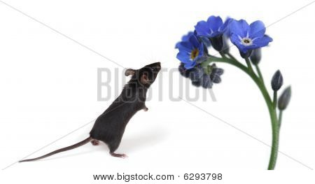 Little Mouse Smelling Flowers