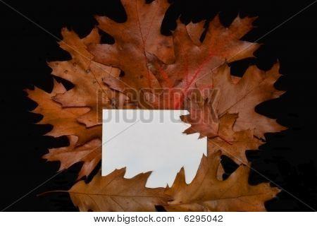 Oak Leaves And Card