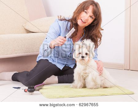 Smiling woman grooming a dog purebreed maltese.