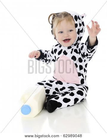 An adorable baby girl dressed as a holstein cow.  She's happily waving as she sits by a half gallon of milk.  On a white background.