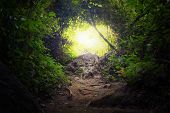 Natural tunnel in tropical jungle forest. Road path way through lush, foliage and trees of evergreen dense rain forest. Mysterious magic background poster
