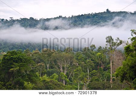 Amazon, View Of The Tropical Rainforest, Ecuador