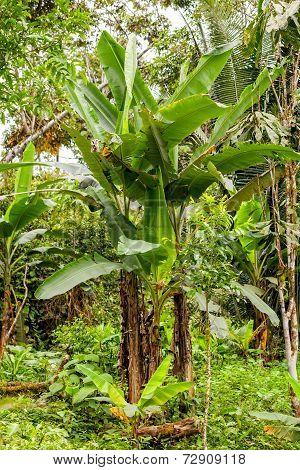 Amazon Plants, Tropical Rainforest, National Park Yasuni, Ecuador poster
