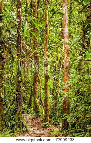 Amazon Rainforest Is A Moist Broadleaf Forest That Covers Most Of The Amazon Basin Of South America