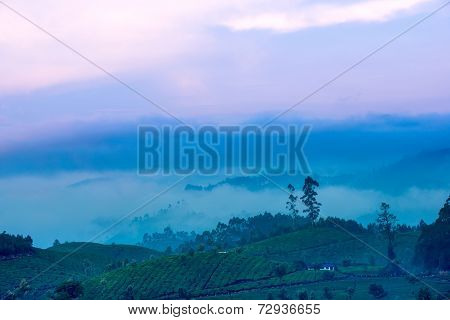 Beautiful Landscape With A Tree And Fog In A Pre-dawn Haze In India, Kerala, Munnar