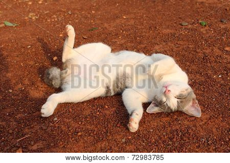 Happy Cat Wallowing On The Ground
