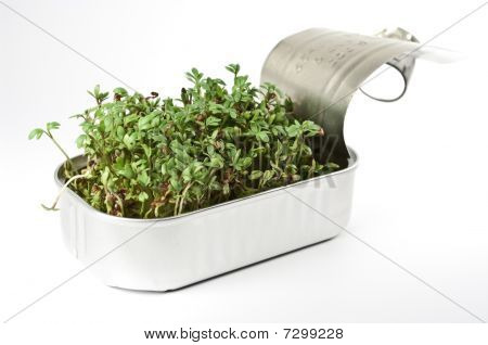 Watercress in a can