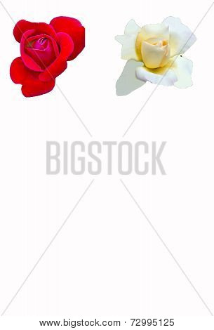 White and red roses on white
