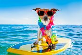 dog surfing on a surfboard wearing a flower chain and sunglasses at the ocean shore poster
