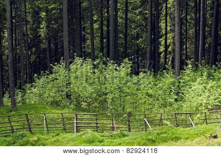 Fencing For Forest Regeneration