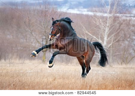Beautiful brown horse racing galloping across the field on a background autumn forest
