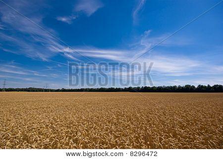 Feld und einer schönen Himmel