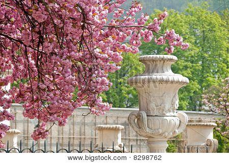 Flowers In The Mirabel Garden, Salzburg