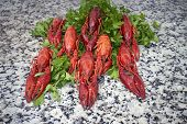 Red river crayfish on green parsley on kitchen grey granite worktop in front perspective poster