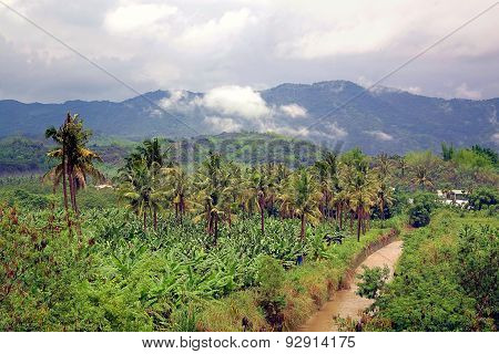 Banana And Palm Trees In Southern Taiwan