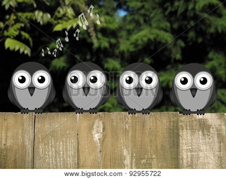 Comical bird dawn chorus perched on a timber garden fence against a foliage background poster
