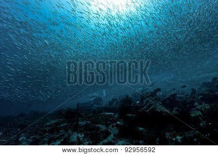 Divers and school of fish in Los Roques, Venezuela