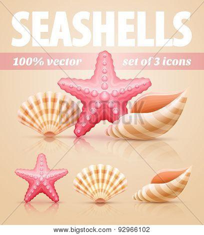 Set of summer sea shells and starfish icons. Eps10 vector illustration