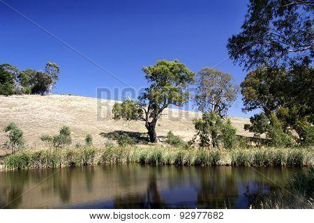 Rural Australian Landscape