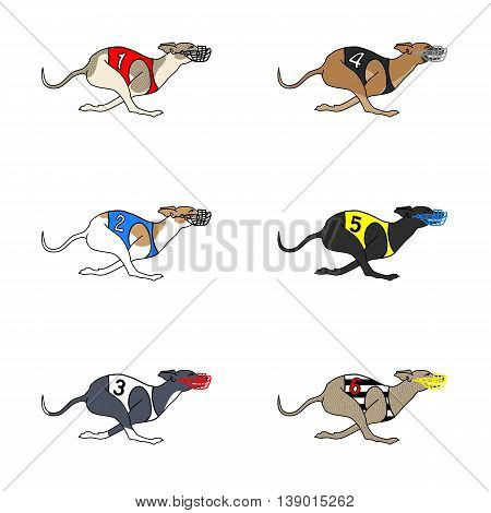 Set of vector images of running dog whippet breed in dog racing or coursing dress