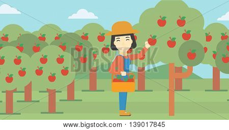 An asian female farmer holding a basket and collecting apples in fruit garden. Farmer collecting apples. Vector flat design illustration. Horizontal layout.