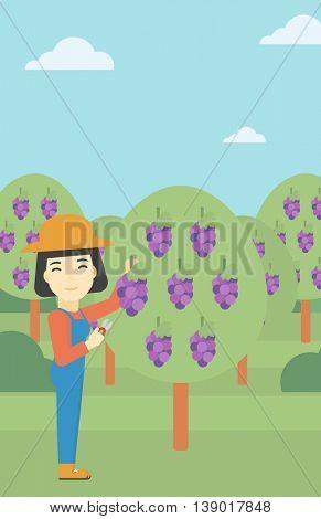 An asian female farmer harvesting grapes in vineyard. Farmer collecting grapes. Young farmer working in vineyard. Vector flat design illustration. Vertical layout.