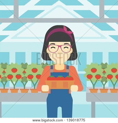 An asian female farmer holding a box with tomatoes on the background of greenhouse. Young farmer collecting tomatoes in the greenhouse. Vector flat design illustration. Square layout.