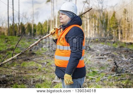Lumberjack in the woods in summer day