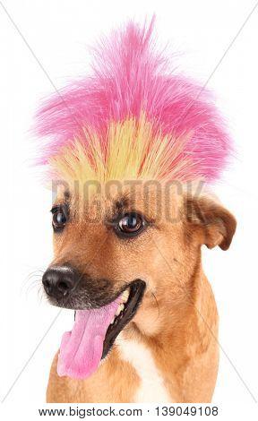 Dog with crazy troll hair