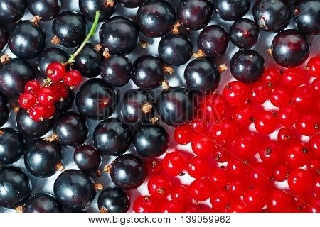 Summer berries black currant, red currant  close up