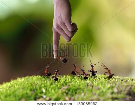 A man's hand and a lot of ants. Ant biting finger. The concept - nature human interaction and the nature management leadership poster