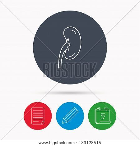 Kidney icon. Transplantation organ sign. Nephrology symbol. Calendar, pencil or edit and document file signs. Vector