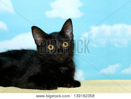 portrait of a black tabby kitten laying on a yellow blanket looking off to the side hopeful for a forever home. Blue background with white clouds copy space