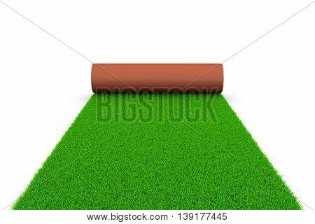 Grassy Carpet