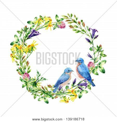 Watercolor wild flowers qand small birds wreath. Bluebird couple. Bell flower clover daisy weeds and meadow herbs. Watercolor wild field wreath. Hand painted floral illustration