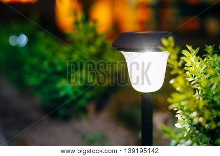 Beautiful Small Solar Garden Light, Lanterns In Flower Bed. Garden Design. Solar Powered Lamp