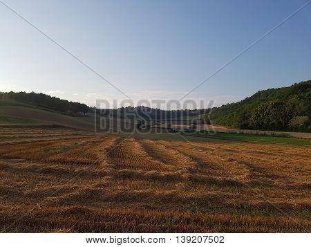 campi del Monferrato in estate - Piemonte - Italia